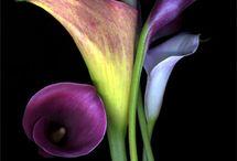 Flora / by Alicia Geedey