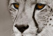 The BIG CATS!! / by Jami Myatt
