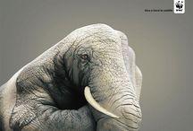 WWF Ad. / by ERR0Rll a3YYEY