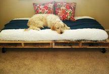 Dog Stuff / by Kerrie Tatarka
