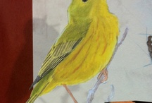 Birds / by Red Persimmon Imports - Katrina Ulrich