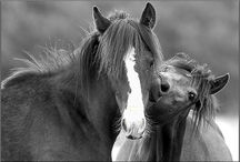 all things equine, are fine as wine / by Amelia Stasny
