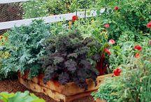 Garden ideas / by Julia Powell