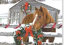 Christmas- Pictures / by Tylar Pattie