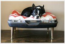 Dog Stuff! / by Jennifer French
