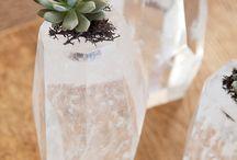 Succulents & Terrariums / by Kelsie Kikuchi