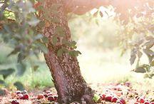 Fall  / by Morgan Johnson