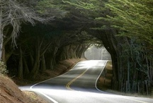 Tree Tunnels / by Patti Taylor