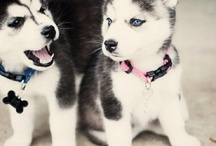 Doggies! / by Tina Michelle