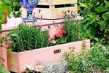 Garden / by Dreams InBloom