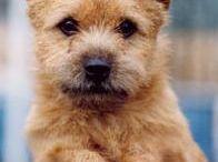 Dogs like Teddy / by Kathy Sterne