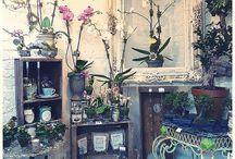 Florist / Florist / by Zimy meyam