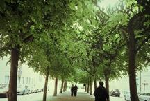 Trees  / by PhotoPhoto xo Admin