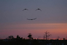 To bring a smile :) / by Amanda Dixon