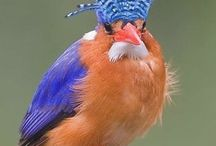Birds / Feel free to browse and pin  also have a board birdhouse bird feeders thnx for pinning  / by Laura Kass