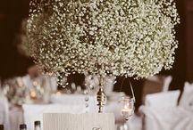 Wedding ideas pt. 2 / by Amanda Peck