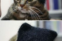 Because-Cat-Pictures-Are-Taking-Over-My-Other-Boards / by Ellice Alman