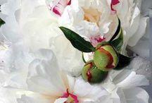 Flowers / by Gloria J Ferguson