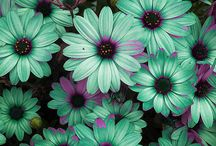 Flowers / by Jennifer Nino