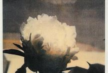 Cy Twombly / by Ingrid K