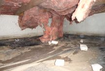 Crawl Space insulation / Fiberglass insulation in a crawl space is a bad idea.  Crawl spaces are susceptible to high moisture levels and fiberglass will soak up the moisture like a sponge and fall out of the joist cavity.  See http://www.indianacrawlspacerepair.com/crawl-space-insulation/ / by Indiana Crawl Space Repair
