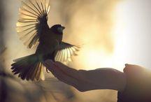 Amazing, Beautiful & Cool Stuff / by Maria Valvano