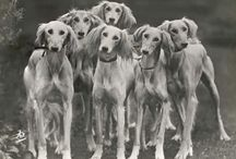 hounds / by Linda Strauss