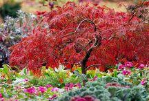 Gardening / by Angela Lemmon
