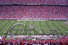 Go Bucks... / Big Buckeye Fan Go Bucks}} / by Carole Musto