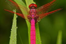 dragonflies / by Keri Evans