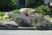 garden inspirations / by Claire Brownstein