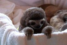 Adorable animals / by Candace