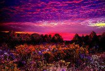 Nature's Splendor  / by Mina Schneider