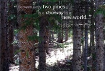 Tree's and Forest / by Sharon Chamness