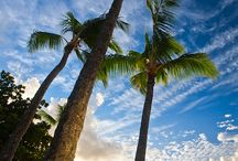 Kauai, Hawaii / by Karis Fisher