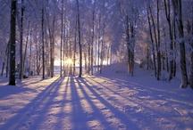 Winter Wonderland / by Turnips 2 Tangerines