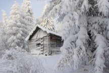 Winter scenes / by Cynthia Macri