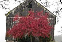 OLD BARNS, CHURCHES & OTHER BUILDINGS / by Toni Seitz