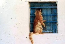 Cats in windows / by Vg Jacobsson