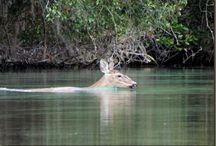 Florida Kayaking  / by Karen Lueck