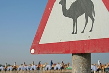 United Arab Emirates / by Sabrina Warren