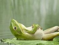 Froggie bottoms / by Gloria Erickson