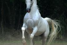 Stunning horses / by Rosemary Thompson
