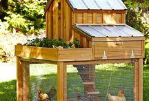 My backyard  coop! / by Kristen