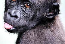 monkeys  / by Scott Byrd