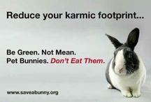 Rabbits: as Pets & Everything You Need to Know / by Danielle Marie