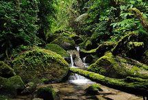 Honduras / by Yamileth Rolon