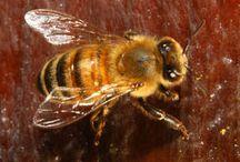 BEES  / by Debbie Floyd