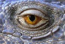 les yeux dans les yeux / by David Planquois