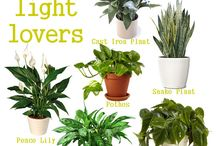 Living with Plants / by Camilla Page